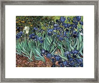 Digital Remix Irises Framed Print by David Bridburg
