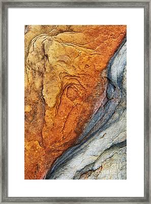 Dinosauric Framed Print by Tim Gainey