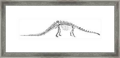 Diplodocus Carnegii Framed Print by Science Source