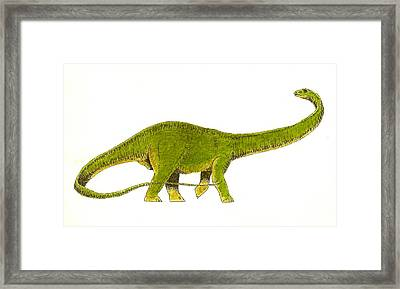 Diplodocus Framed Print by Michael Vigliotti