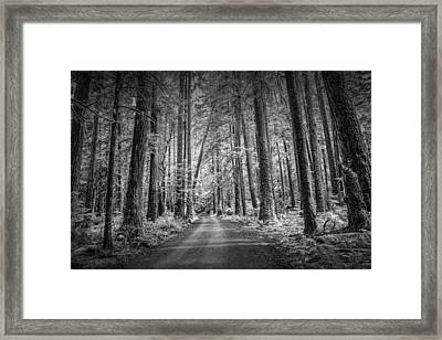 Dirt Road Through A Rain Forest In Black And White Framed Print by Randall Nyhof