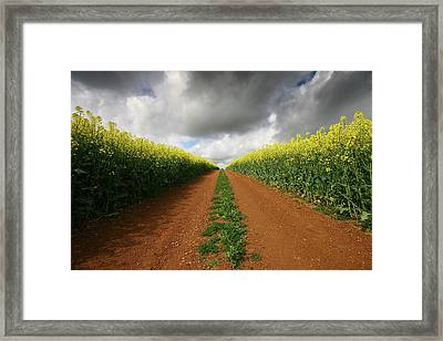 Dirt Track Through Red Soil In A Rapeseed Flower Field Framed Print by Mark Stokes