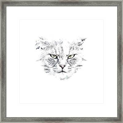 Disturbed Cat Framed Print by Everet Regal