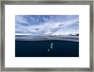 Underwater Diva Framed Print featuring the photograph Dive by Justin Hofman
