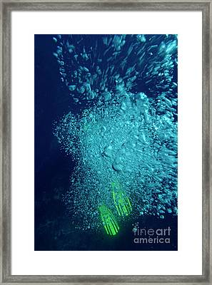 Diver's Swimfin Poking Out From Under His Air Bubbles Framed Print by Sami Sarkis