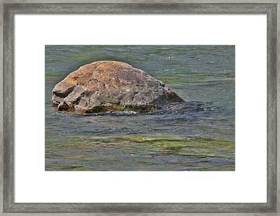 Diving Turtle Rock - Flathead River Middle Fork Mt Framed Print by Christine Till