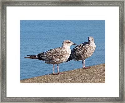 Do You Come Here Often Framed Print by Gill Billington