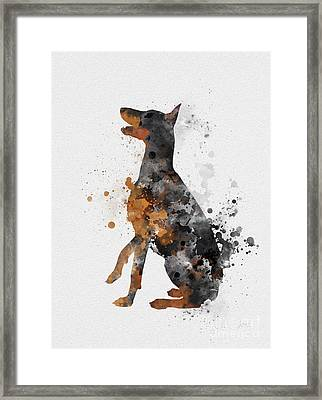 Doberman Pinscher Framed Print by Rebecca Jenkins