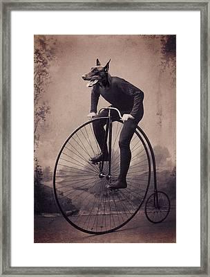 Doberman Velocipede Framed Print by Aged Pixel