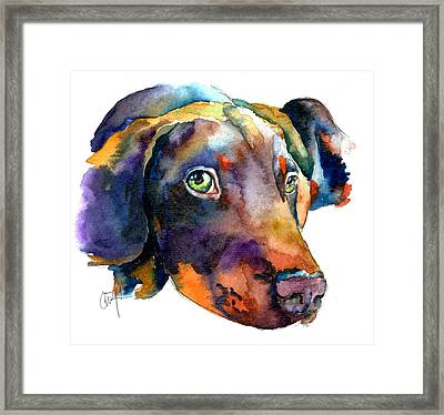 Doberman Watercolor Framed Print by Christy  Freeman