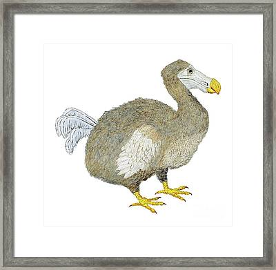 Dodo Bird Protrait Framed Print by Thom Glace