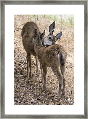 Doe And Fawn Framed Print by Bruce Frye