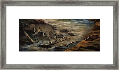 Doe Creek Framed Print by Kimberly Benedict