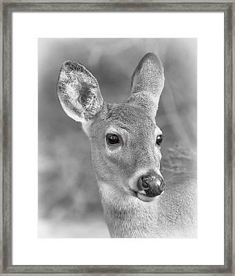 Doe Eyes Framed Print by Pat Eisenberger