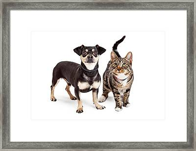 Dog And Cat Standing Looking Up Together Framed Print by Susan Schmitz