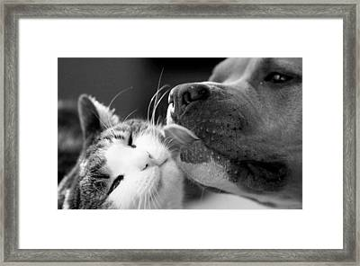 Dog And Cat  Framed Print by Sumit Mehndiratta