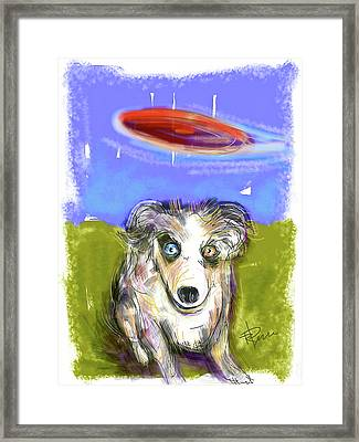 Dog And Frisbee Framed Print by Russell Pierce