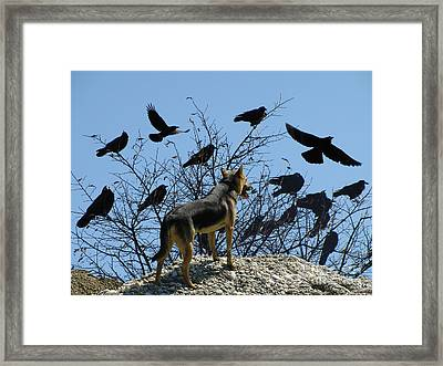 Dog And Ravens Framed Print by Mira Ostojic
