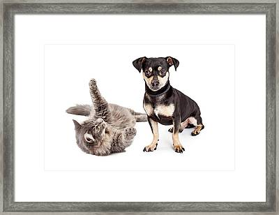 Dog Annoyed With Playful Cat Framed Print by Susan Schmitz