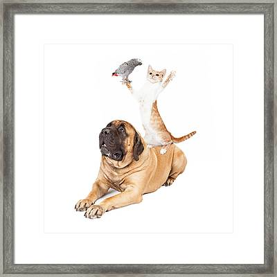 Dog Cat And Bird Playing Framed Print by Susan  Schmitz