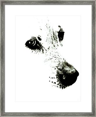 Dog Face Framed Print by Frank Tschakert