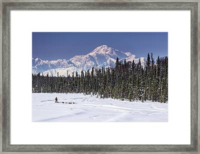 Dog Musher Martin Buser Runs His Team Framed Print by Jeff Schultz