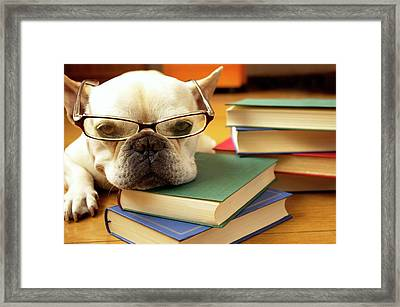 Dog Study Framed Print by quiLie