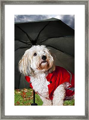 Dog Under Umbrella Framed Print by Elena Elisseeva