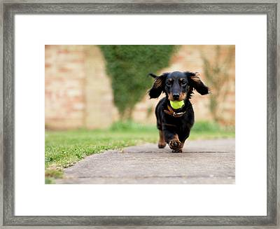 Dog With Ball Framed Print by Ian Payne