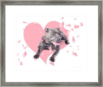 Dog With Pink Rose On Heart Shape Background Framed Print by Jorgo Photography - Wall Art Gallery