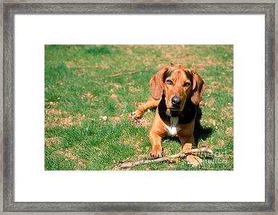 Dog With Stick Framed Print by John Kaprielian