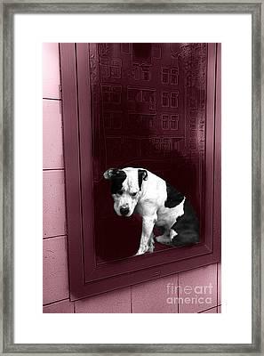 Doggie In The Window Pop Art Framed Print by John Rizzuto