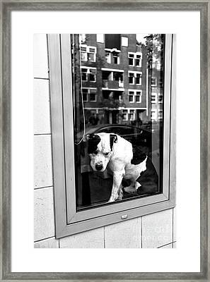 Doggy In The Window Mono Framed Print by John Rizzuto