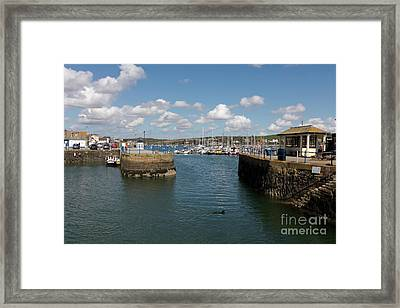 Doggy Paddle Falmouth Quay Framed Print by Terri Waters