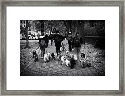Dog Walking Framed Print by Jessica Jenney