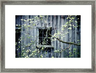 Dogwood Blossoms  Framed Print by Thomas Schoeller