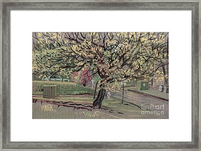 Dogwood Framed Print by Donald Maier