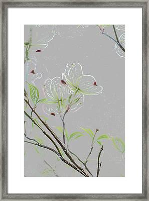 Dogwood Flowers Framed Print by Andrea Kappler