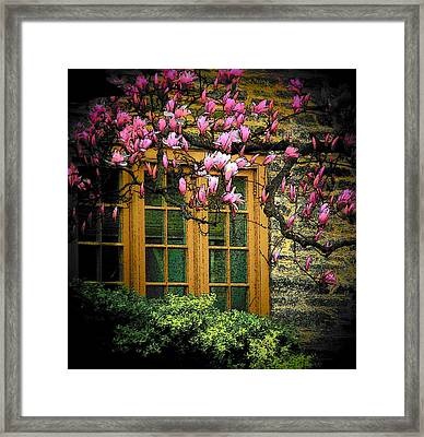 Dogwood In The Spring Framed Print by Joyce Kimble Smith