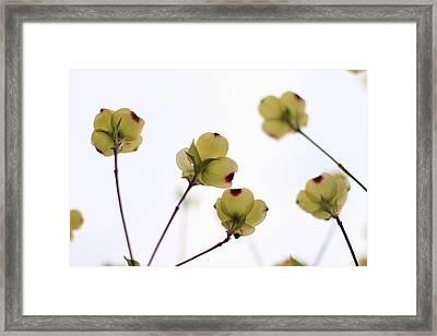Dogwood Sky Framed Print by Andrea Kappler