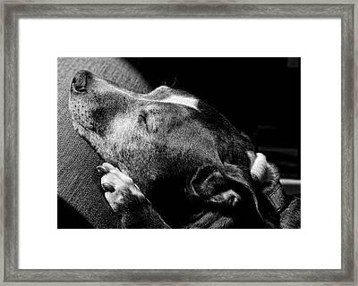 Dolores Sunbathing Framed Print by Robert Ullmann