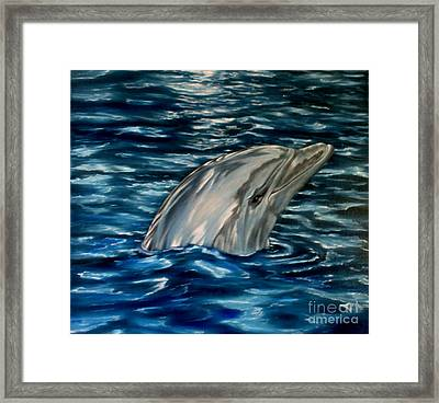 Dolphin Curiosity Oil Painting Framed Print by Avril Brand