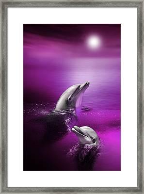 Dolphin Delights Framed Print by Julie L Hoddinott