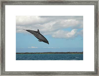Dolphin Jump Framed Print by Alan Lenk