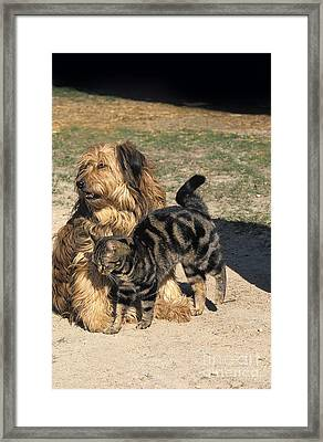 Domestic Dog And Cat Framed Print by Gerard Lacz