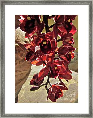 Donatelli Framed Print by Gwyn Newcombe