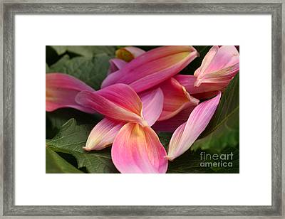 Done Blooming Framed Print by Steve Augustin
