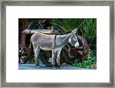 Donkey And Old Tractor Framed Print by Garry Gay