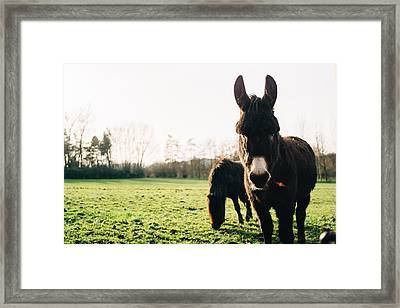 Donkey And Pony Framed Print by Pati Photography