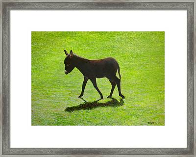 Donkey Foal Framed Print by Eamon Doyle